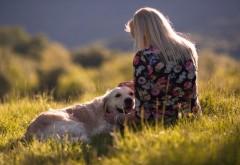 Собака, девушка, поля, настроение, картинки