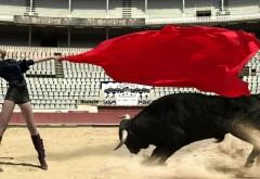HD обои beautiful_girl_bull_fighting