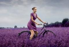 Леди на велосипеде на пурпурном поле картинки скачать